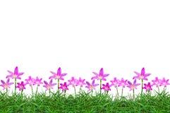 Fleurs sur le fond d'herbe verte photo stock