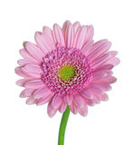 Fleurs sur le fond de whitr photographie stock