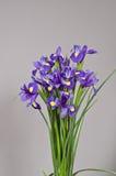 Fleurs sur le fond gris Photo stock