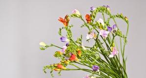 Fleurs sur le fond gris Images libres de droits