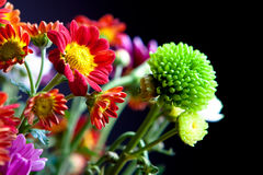Fleurs sur le fond noir Photo libre de droits