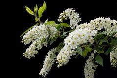 Fleurs sur le fond noir - fleurs de floraison colorées de ressort des buissons et des arbres Photo stock