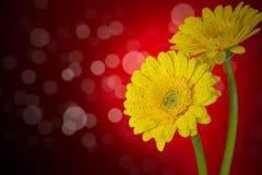 Fleurs sur le fond rouge image libre de droits