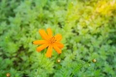 Fleurs sur le fond vert Photo stock