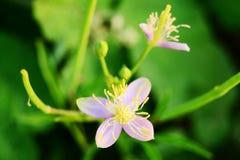 Fleurs sur le jardin photo libre de droits