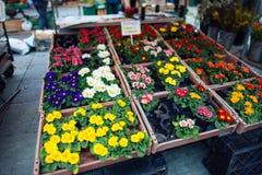 Fleurs sur le marché Photographie stock libre de droits