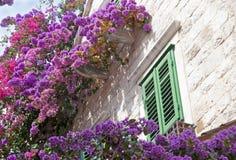 Fleurs sur le mur Photos libres de droits