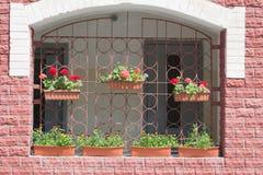 fleurs sur le mur Images libres de droits