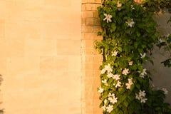 fleurs sur le mur Photographie stock libre de droits