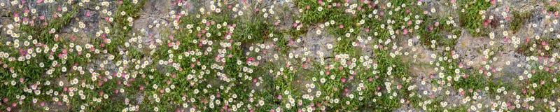 fleurs sur le mur Photos stock