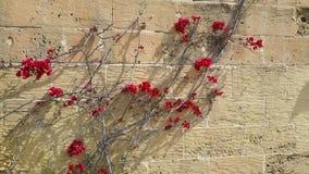 fleurs sur le mur Image stock