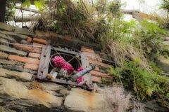 Fleurs sur le mur dans Riomaggiore en La Spezia Image stock
