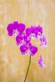 Fleurs sur le mur de salle de bains, style abstrait Images libres de droits