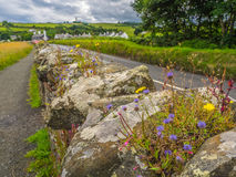 Fleurs sur le mur en pierres sèches Images stock
