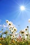 Fleurs sur le pré en été Photo libre de droits