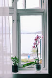 Fleurs sur le rebord de fenêtre Images stock