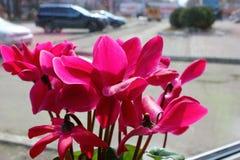 Fleurs sur le rebord de fenêtre derrière la ville en verre Image libre de droits