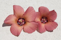 Fleurs sur le sable. Photos stock
