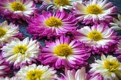 Fleurs sur le tissu bleu avec un modèle, fond de nature, papier peint Photos libres de droits