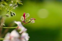 Fleurs sur le vert Photo stock