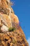 Fleurs sur le visage de falaise Photographie stock libre de droits