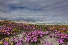 Fleurs sur les dunes Photo stock