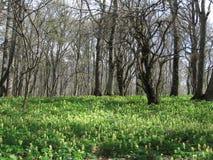 Fleurs sur les forêts Photos stock