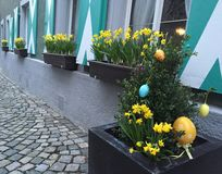 Fleurs sur les hublots Photo libre de droits