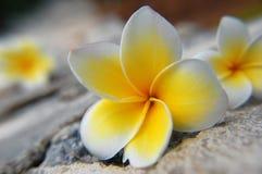Fleurs sur les roches Photographie stock libre de droits