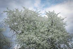 Fleurs sur les trois photographie stock