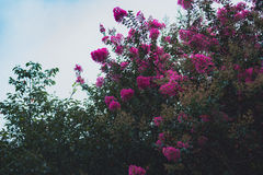 Fleurs sur LUSHAN Photo libre de droits