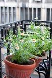 Fleurs sur un balcon de ville Image stock