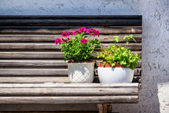 Fleurs sur un banc photo stock