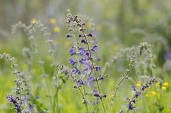 Fleurs sur un champ Photos libres de droits