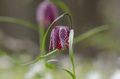 Fleurs sur un champ Image stock