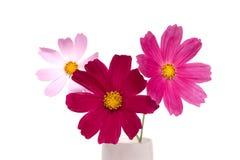 Fleurs sur un fond blanc Photos libres de droits