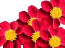 Fleurs sur un fond blanc images libres de droits
