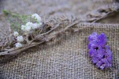 Fleurs sur un fond de toile images stock