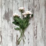 Fleurs sur un fond en bois images stock