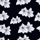 Fleurs sur un fond noir Image stock