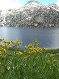 Fleurs sur un lac images stock