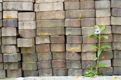 Fleurs sur un mur de briques Photographie stock libre de droits