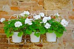 Fleurs sur un plan rapproché de mur Photo stock