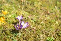 Fleurs sur un pré Image stock