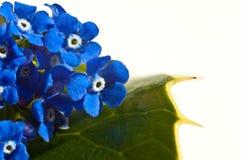 Fleurs sur une carte de lame Image stock