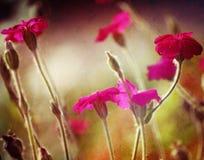 Fleurs texturisées Images libres de droits