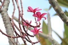 Fleurs, tiges, couleur rougeâtre, tiges brunes, fleurs de fleur photo stock