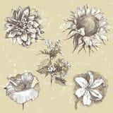 Fleurs tirées par la main Image libre de droits