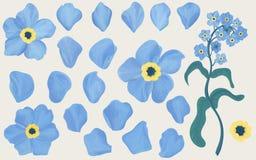 Fleurs tirées par la main de myosotis Photos stock