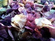 Fleurs tombées Image libre de droits
